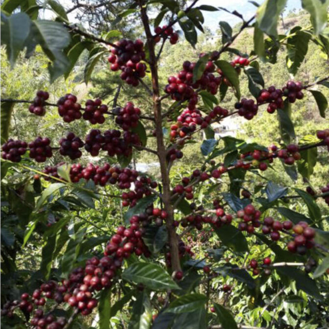 New Coffee Beans(10月-02)
