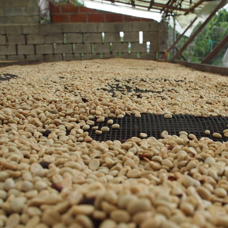 ゲイシャを含むコロンビア ベラクルース農園のロット違いを飲み比べられるノミンハーフ「テイスターパッケージ」がスタート!オンラインにて数量限定
